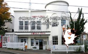 【小樽スイーツ】小樽ミルク・プラントの基本情報-NYジャンボが凄い!